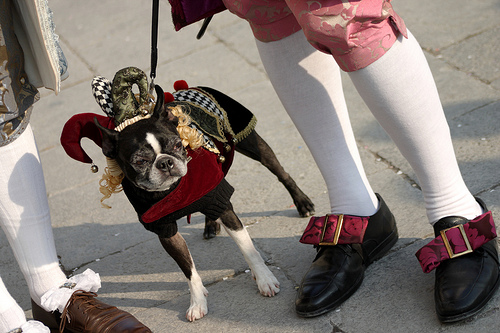 Dog in Costume at Venice Carnival